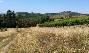 La collina di Mugnano (Certaldo)