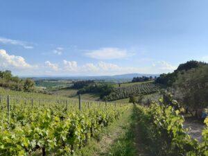 Guide in Toscana. Veduta della campagna intorno alla Pieve di San Lazzaro a Lucardo (Certaldo)