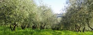 visite guidate olio extravergine Toscana