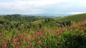 San Gaudenzio a Ruballa (Certaldo), alcune delle terre già dei Pitti di Luia