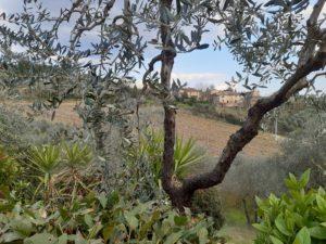 Guide in Toscana Il borgo rurale di Luia (Certaldo)